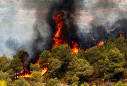 Подмосковные леса в опасности!
