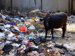 Борьба против мусора – каждый день.