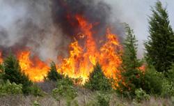 Глава Госадмтехнадзора рассказала о противопожарной работе ведомства.