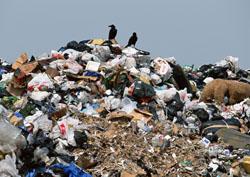 Витушева: борьба с мусором – одно из приоритетных направлений летней надзорной деятельности.