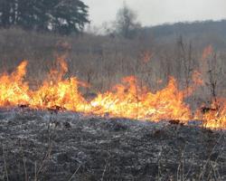 Порядок использования открытого огня и разведения костров на землях сельскохозяйственного назначения и землях запаса!