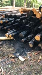 Поджог деревьев в Губайловском парке Красногорска.