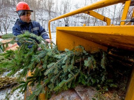 В 2019 году живые ели в Красногорске можно утилизировать в специально отведенных местах!