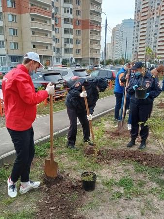 В Красногорске полицейские и общественники присоединились к акции «Лес Победы».