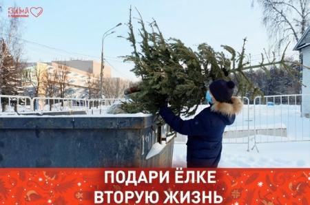 Экоакция «Подари вторую жизнь своей ёлке» стартовала в Красногорске!