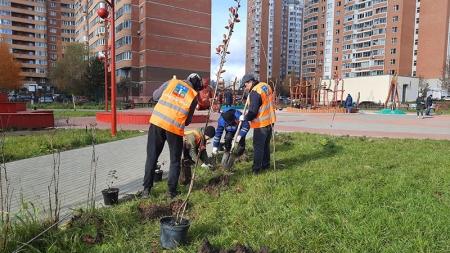 В мкр Чернево-2, города Красногорска высадили деревья и кустарники.